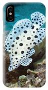Barramundi Cod IPhone Case