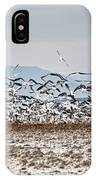 Bombay Beach Birds IPhone Case