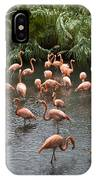 Caribbean Flamingos At The Zoo IPhone Case