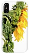 Close Up Of Sunflower. IPhone Case