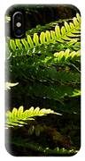 Common Polypody IPhone Case