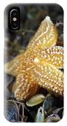 Common Starfish Feeding IPhone Case