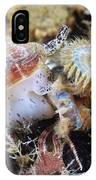Common Whelk IPhone Case