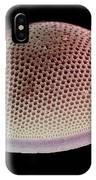 Diatom Alga, Sem IPhone Case
