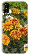 Gazania Gazania Rigens Flowers IPhone Case