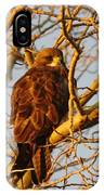 Hawk In A Tree IPhone Case