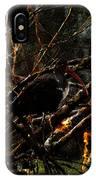 Ibis At Dusk IPhone Case