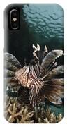 Lionfish, Indonesia IPhone Case