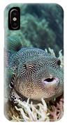 Map Pufferfish IPhone Case