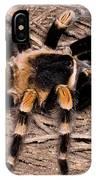 Mexican Red-legged Tarantula IPhone Case
