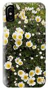 Mountain Avens (dryas Octopetala) IPhone Case