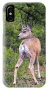 Mule Deer Doe IPhone Case