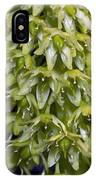 Pineapple Lily (eucomis Autumnalis) IPhone Case