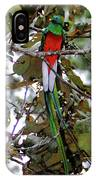 Resplendent Quetzal IPhone Case