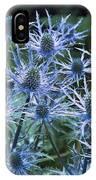 Sea Holly (eryngium X Oliverianum) IPhone Case