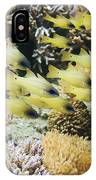 Seale's Cardinalfish IPhone Case