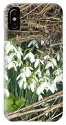 Snowdrop (galanthus Nivalis) IPhone Case