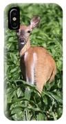 Whitetail Deer IPhone Case