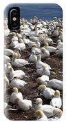 Gannet Colony IPhone Case