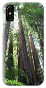 Redwoods Sequoia Sempervirens IPhone Case