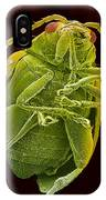 Beetle, Sem IPhone Case
