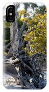 Driftwood On The Beach IPhone Case