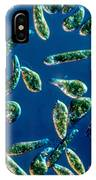 Euglena Gracilis IPhone Case