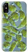 Euglena, Lm IPhone Case