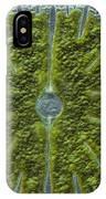 Micrasterias Sp. Algae Lm IPhone Case