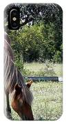 Wild Spanish Mustang Foal IPhone Case