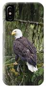 Bald Eagle Haliaeetus Leucocephalus IPhone Case