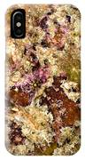 Frogfish IPhone Case