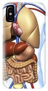 Human Anatomy, Artwork IPhone Case