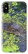 31- Alligator Hatchling IPhone Case