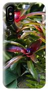 Bromeliad Plant IPhone Case