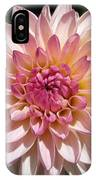 Dahlia Named Valley Porcupine IPhone Case