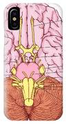 Illustration Of Cranial Nerves IPhone Case