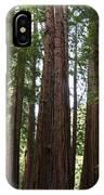 Redwoods Sequoia Sempervirens IPhone Case