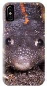 Mexican Burrowing Toad IPhone Case