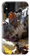 A Fallen Birch Still Claims Its Beauty IPhone Case