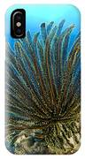 A Feather Star With Arms Extended IPhone Case