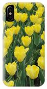 A Field Of Yellow Tulips In Spring IPhone Case
