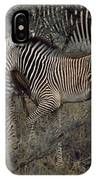 A Grevys Zebra With Young In Samburu IPhone Case