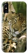 A Jaguar Rests On The Jungle Floor IPhone Case