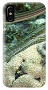 A Pair Of Trumpetfish Off The Coast IPhone Case