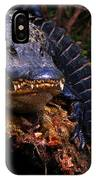 American Alligator On A Cypress Tree IPhone Case