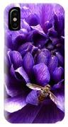 Anemone Coronaria Named Lord Lieutenant IPhone Case