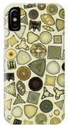 Arrangement Of Diatoms IPhone Case