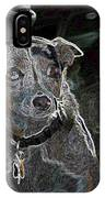 Australian Cattle Dog Sheltie Mix IPhone Case