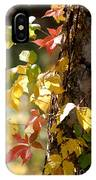 Autumn Colors IPhone Case